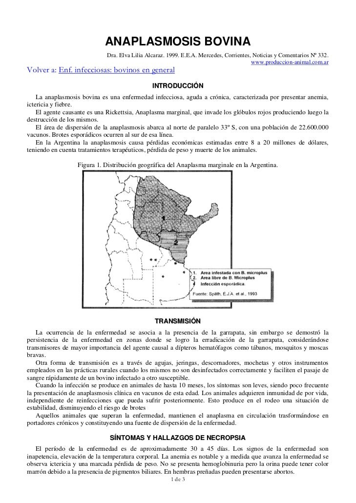 ANAPLASMOSIS BOVINA                             Dra. Elva Lilia Alcaraz. 1999. E.E.A. Mercedes, Corrientes, Noticias y Com...