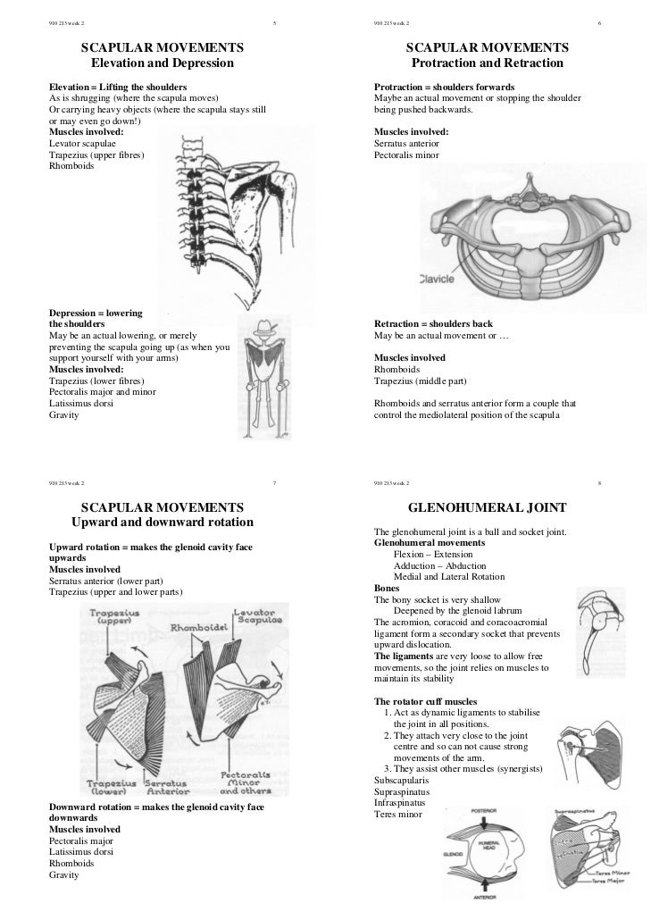 40167921 human-functional-anatomy-shoulder-movement