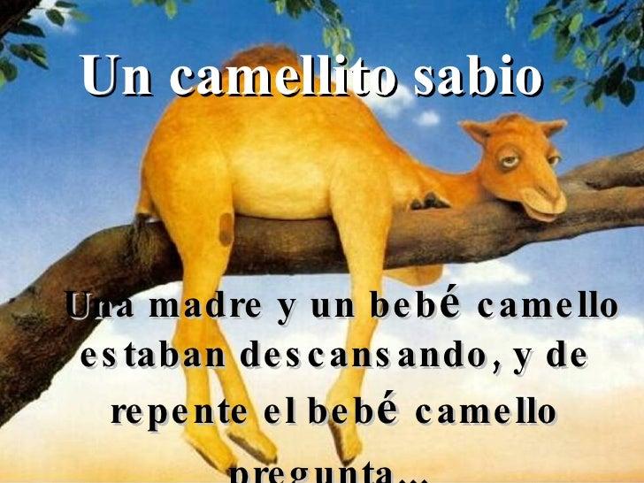 Un camellito sabio Una madre y un beb é  camello estaban descansando, y de repente el beb é  camello pregunta...