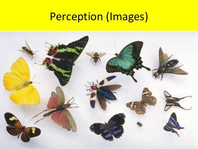 Perception (Images)