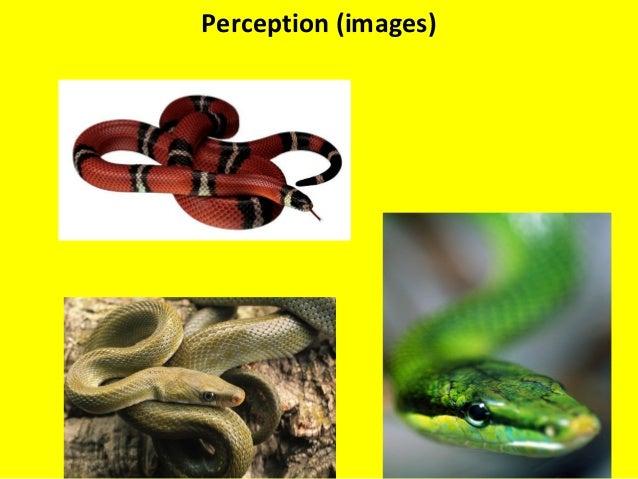 Perception (Images) Perception (images)