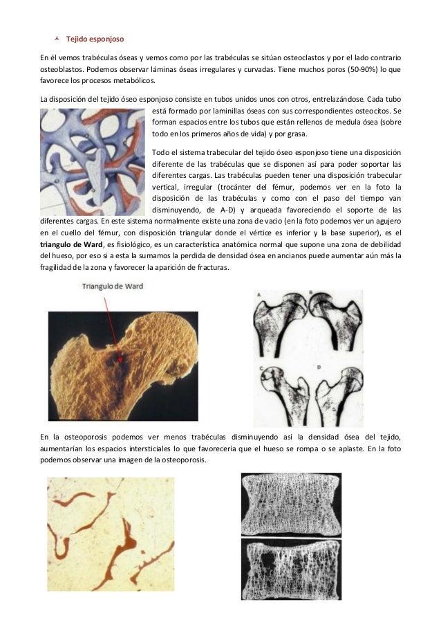 420 2014-02-18-01 fisiopatologia osea