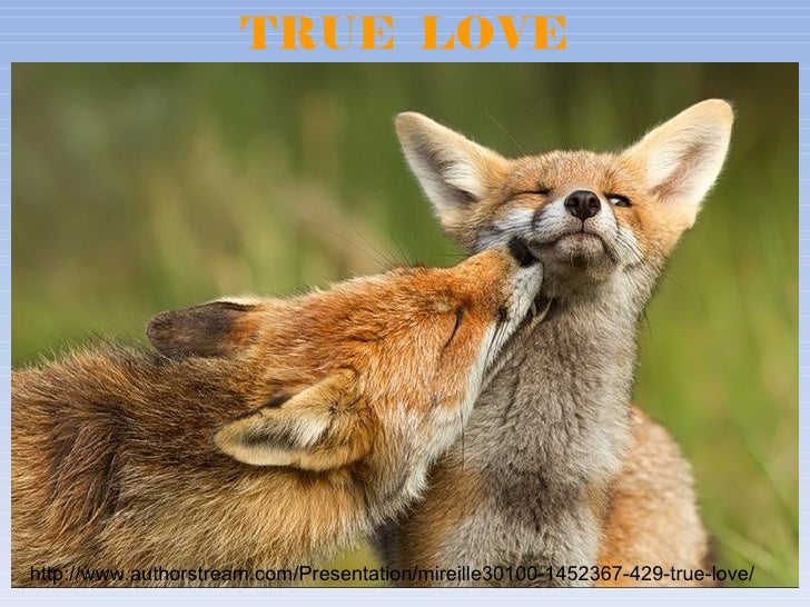 TRUE LOVEhttp://www.authorstream.com/Presentation/mireille30100-1452367-429-true-love/