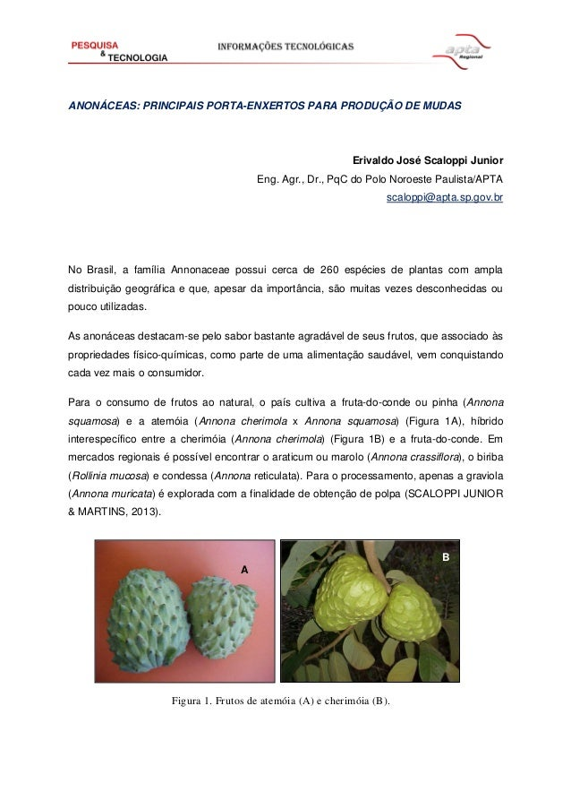 ANONÁCEAS: PRINCIPAIS PORTA-ENXERTOS PARA PRODUÇÃO DE MUDAS  Erivaldo José Scaloppi Junior Eng. Agr., Dr., PqC do Polo Nor...