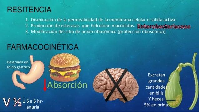 tetraciclinas, macrolidos, clindamicina, cloranfenicol