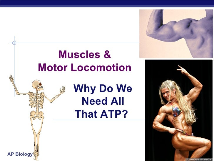 Muscles &             Motor Locomotion                   Why Do We                    Need All                   That ATP?...