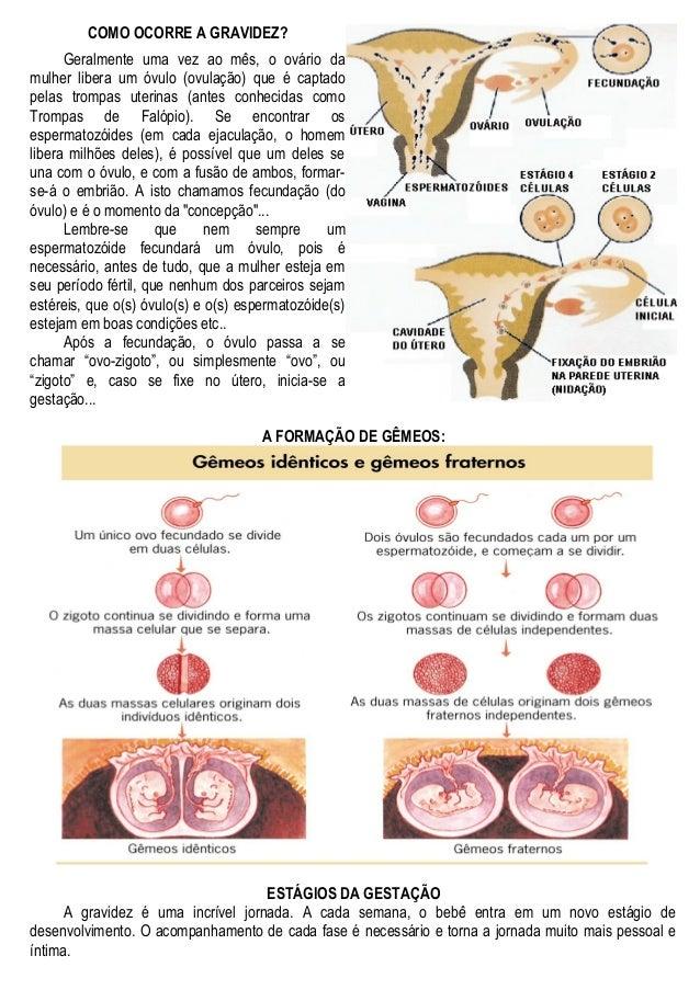 COMO OCORRE A GRAVIDEZ? Geralmente uma vez ao mês, o ovário da mulher libera um óvulo (ovulação) que é captado pelas tromp...