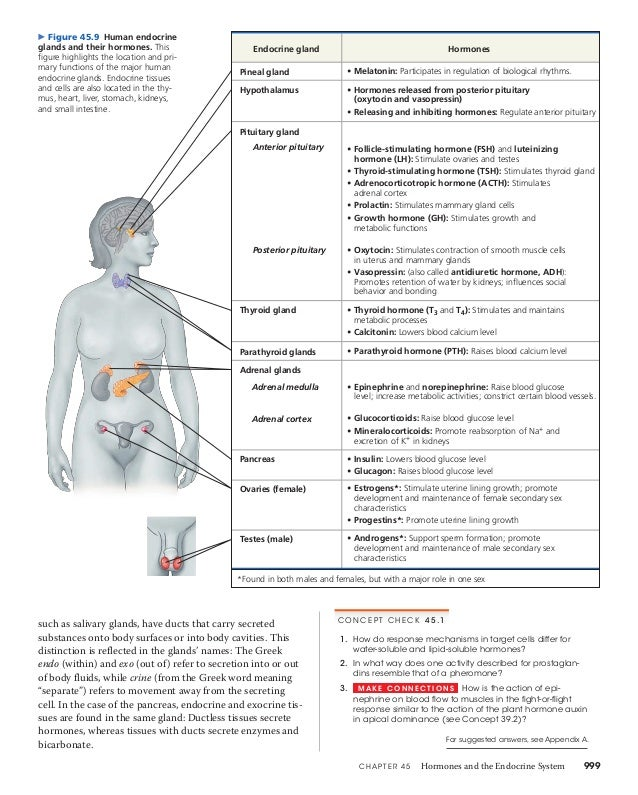 45 Hormones And The Endocrine System