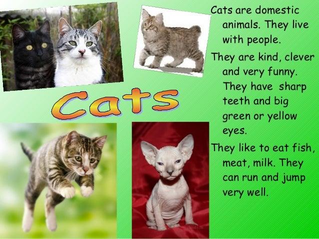 descriptive paragraph about cats