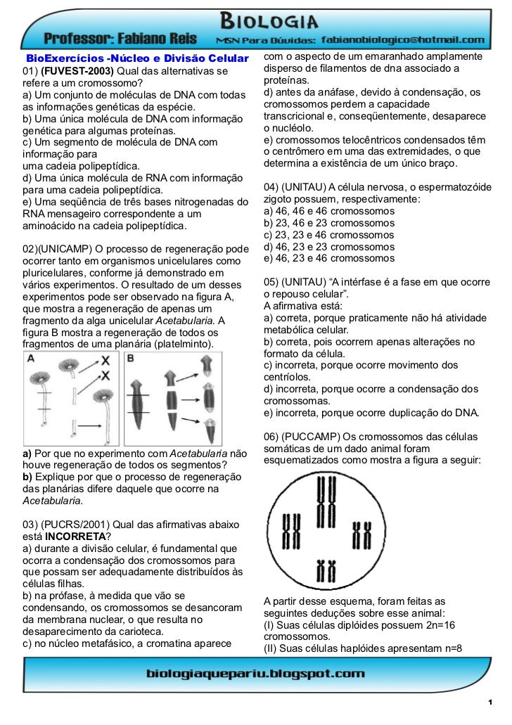 BioExercícios -Núcleo e Divisão Celular          com o aspecto de um emaranhado amplamente01) (FUVEST-2003) Qual das alter...