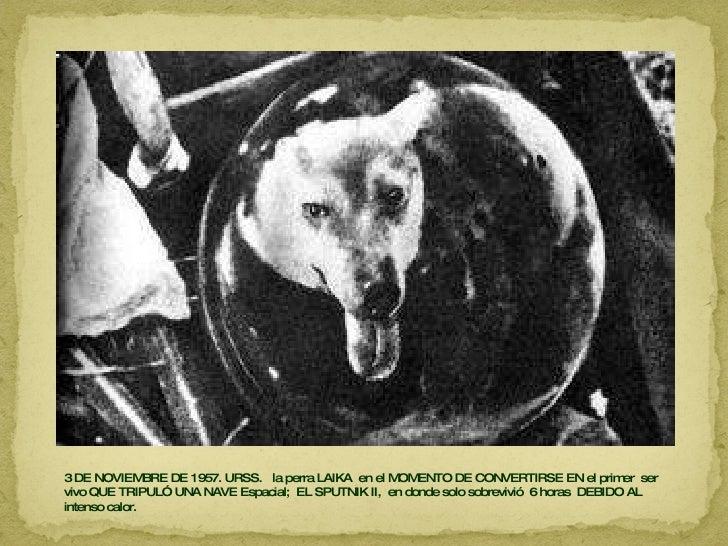 3 DE NOVIEMBRE DE 1957. URSS.  la perra LAIKA  en el MOMENTO DE CONVERTIRSE EN el primer  ser vivo QUE TRIPULÓ UNA NAVE Es...