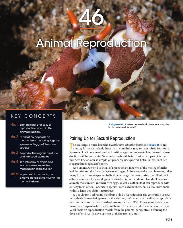 Mammal reproduce asexual