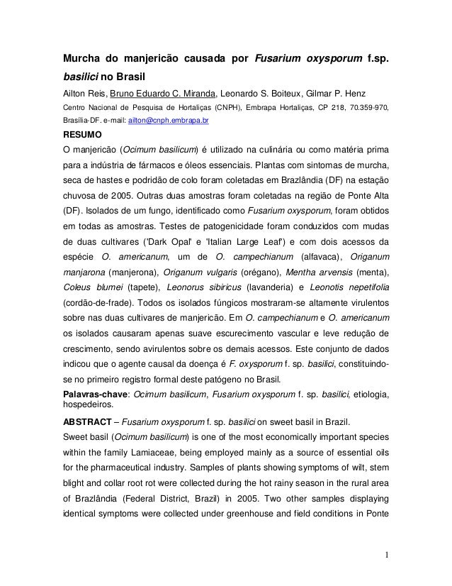 Murcha do manjericão causada por Fusarium oxysporum f.sp.  basilici no Brasil  Ailton Reis, Bruno Eduardo C. Miranda, Leon...