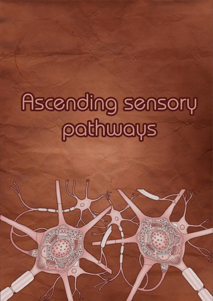 Index    Ascending sensory                                    Introduction                                 3    pathways  ...