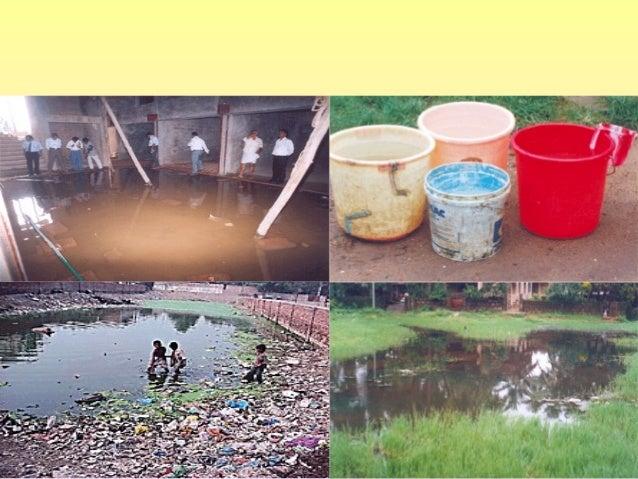 Ambiente • Explosión demográfica • Deforestación • Calentamiento global • Inundaciones • Competencia por alimento • Rápido...