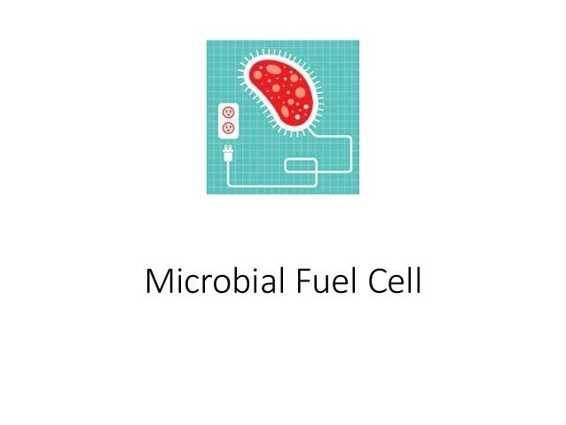microbial fuel cell thesis A technical and cultural feasibility assessment of household microbial fuel cells for use in hanan'g district, tanzania  by  erinn kunik  a thesis.
