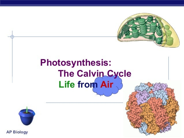 Photosynthesis: The Calvin Cycle Life from Air  AP Biology  2007-2008