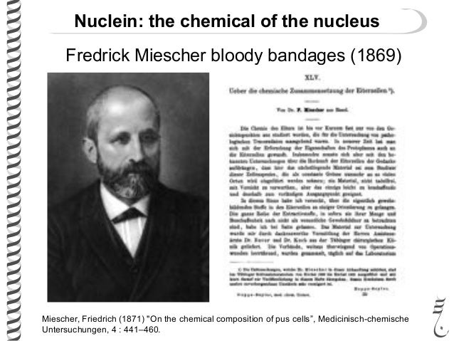 friedrich mieschers experiments on the nuclei Molecular structure of nucleic acids: a structure for deoxyribose nucleic acid was the first article  friedrich miescher james, j mieschers discoveries.