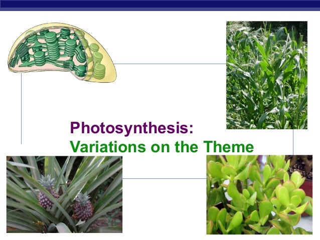 Photosynthesis:             Variations on the ThemeAP Biology                             2007-2008