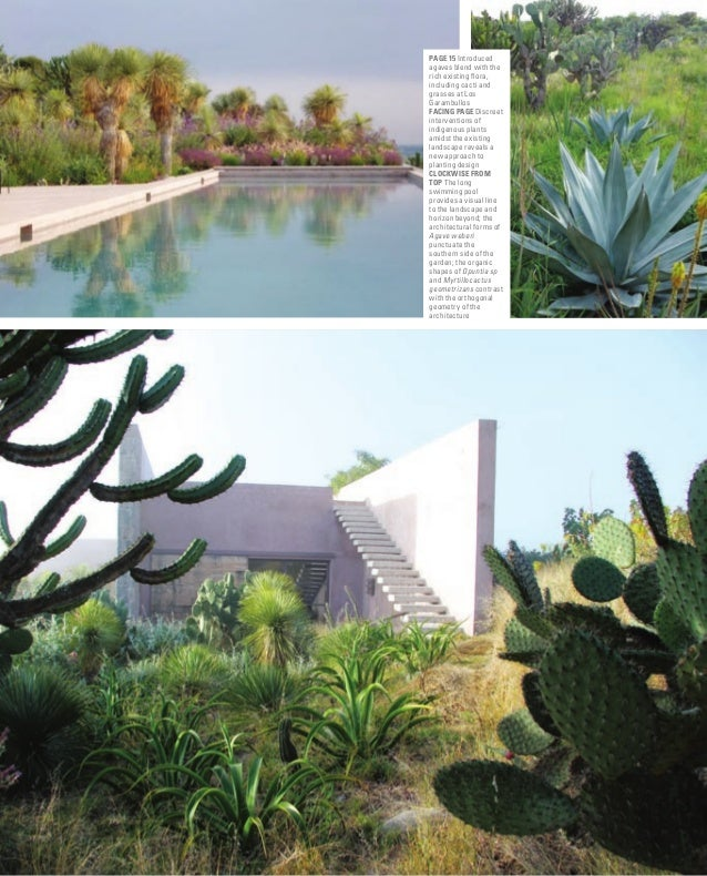 www.sgd.org.uk GARDEN DESIGN JOURNAL PagE 15 Introduced agaves blend with the rich existing flora, including cacti and gra...