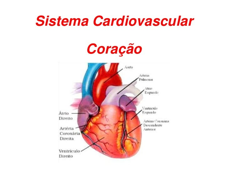 Sistema Cardiovascular         Coração