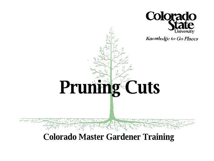 Colorado Master Gardener Training Pruning Cuts