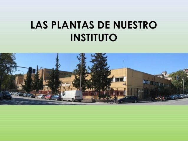 LAS PLANTAS DE NUESTRO INSTITUTO