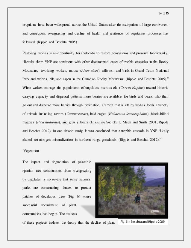 an analysis of the effects of wolf predation on the populations of large ungulates Hypotheses of the effects of wolf predation john feldersnatch december 1st, 1995 abstract: this paper discusses four hypotheses to explain the effects of wolf predation on prey populations of large ungulates.
