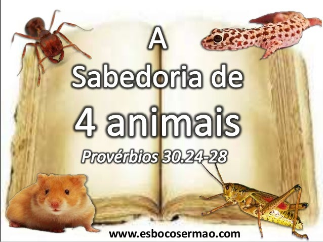 www.esbocosermao.com
