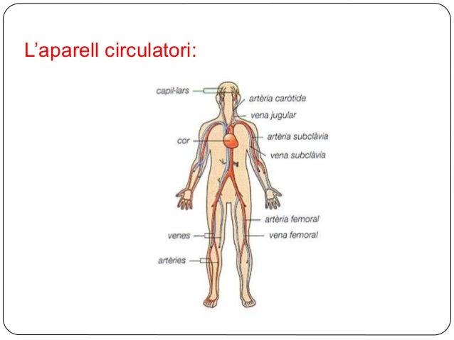 APARELL CIRCULATORI 6è Slide 3