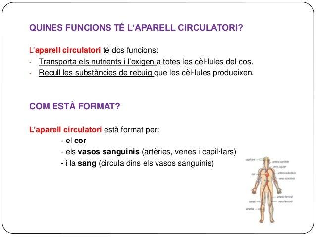 QUINES FUNCIONS TÉ L'APARELL CIRCULATORI? L'aparell circulatori té dos funcions: - Transporta els nutrients i l'oxigen a t...