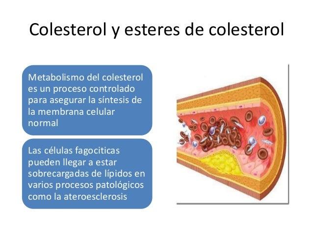 Glucógeno Depósitos excesivos de glucógeno se asocian a anomalías en el metabolismo de la glucosa o glucógeno Ejemplo la d...