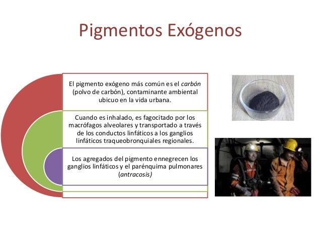 Pigmentos endógenos Hemodiserina • La hemosiderina es un pigmento granular derivado de la hemoglobina • Con un color de am...