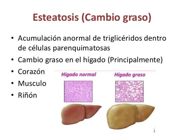 Colesterol y esteres de colesterol Metabolismo del colesterol es un proceso controlado para asegurar la síntesis de la mem...