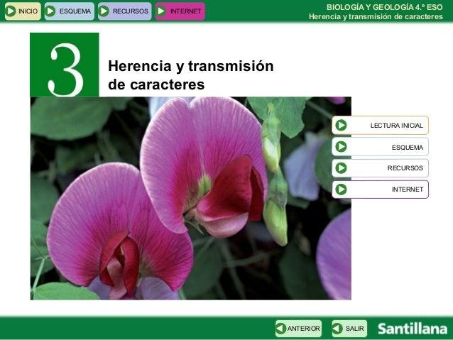 BIOLOGÍA Y GEOLOGÍA 4.º ESO Herencia y transmisión de caracteres INICIO ESQUEMA RECURSOS INTERNET SALIRANTERIOR LECTURA IN...