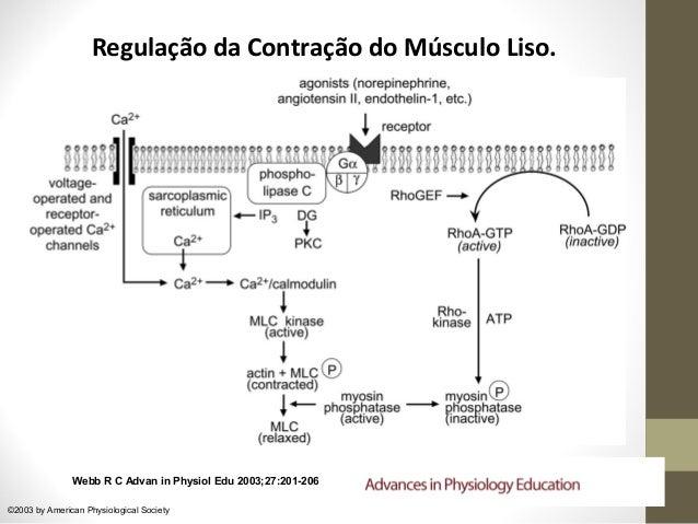 receptores intracelulares esteroides
