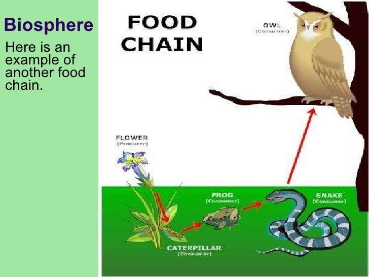 biosphere examples wwwpixsharkcom images galleries
