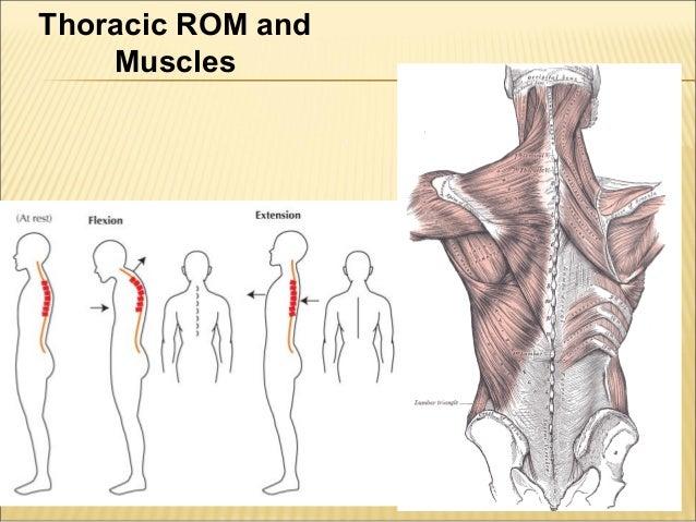 thoracic spine, Cephalic Vein