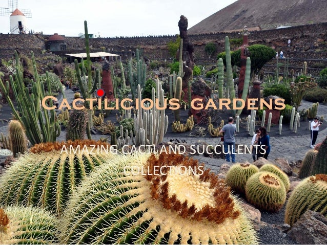 Cactilicious gardens AMAZING CACTI AND SUCCULENTS COLLECTIONS