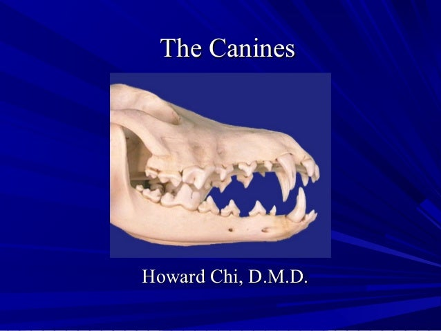 The CaninesThe Canines Howard Chi, D.M.D.Howard Chi, D.M.D.