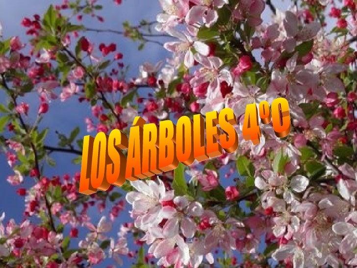 LOS ÁRBOLES 4ºC