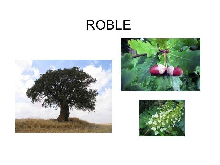 Tipos de rboles for Tipos de arboles y caracteristicas