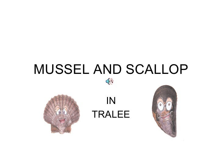 MUSSEL AND SCALLOP IN TRALEE