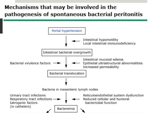 SBP and hepatic encephalopathy