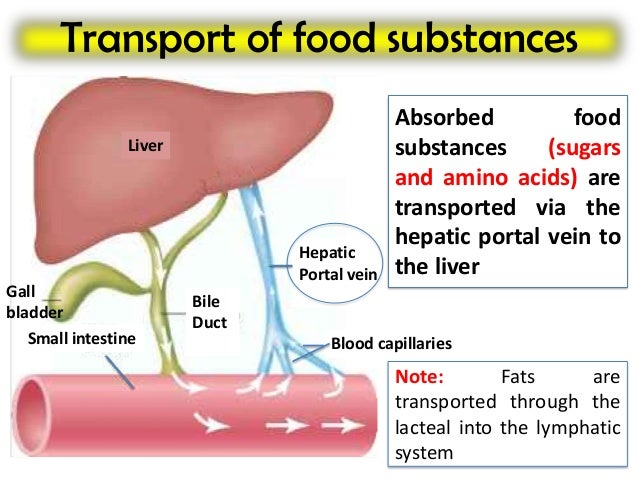 activity 4 assessing fat digestion by Specific bacteria in the small intestine are crucial for fat absorption  and to  assess the role of diet-induced microbes on the digestion and uptake of fats   activity of certain microbes that promote fat absorption, or increasing.