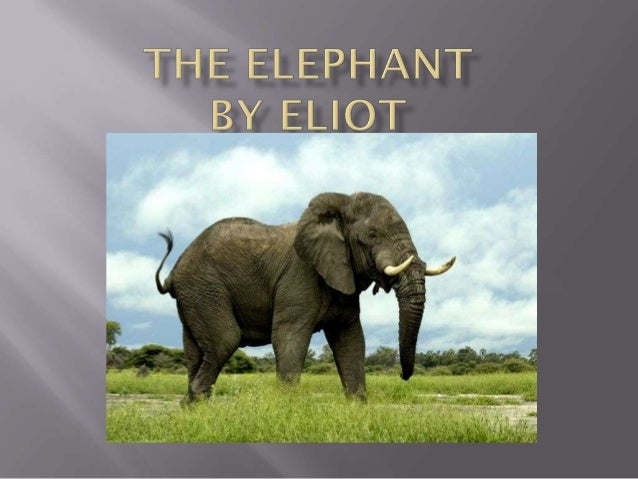 What is an Elephant     3Comparison              4The Asian Elephant      5The African Elephant    7Old Elephants         ...