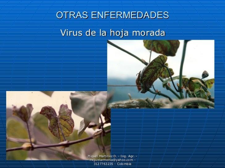 4 enfermedades granadilla