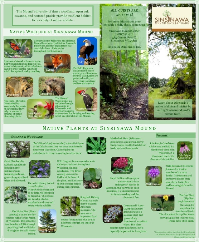 Sinsinawa Nature Brochure