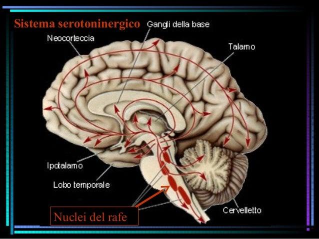 Sistema serotoninergico Nuclei del rafe