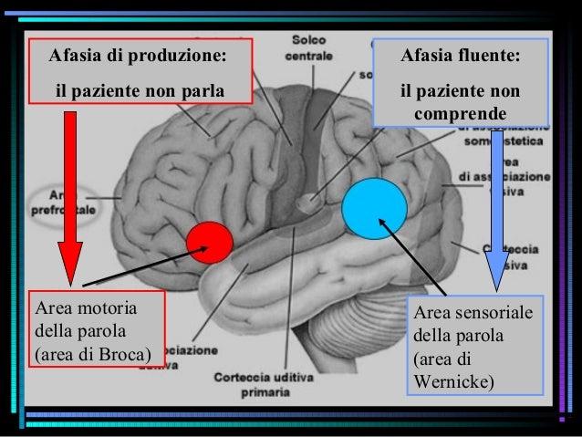 Studio degli effetti di lesioni cerebrali Il principio della doppia dissociazione Lesione in area X area di Broca Deficit ...